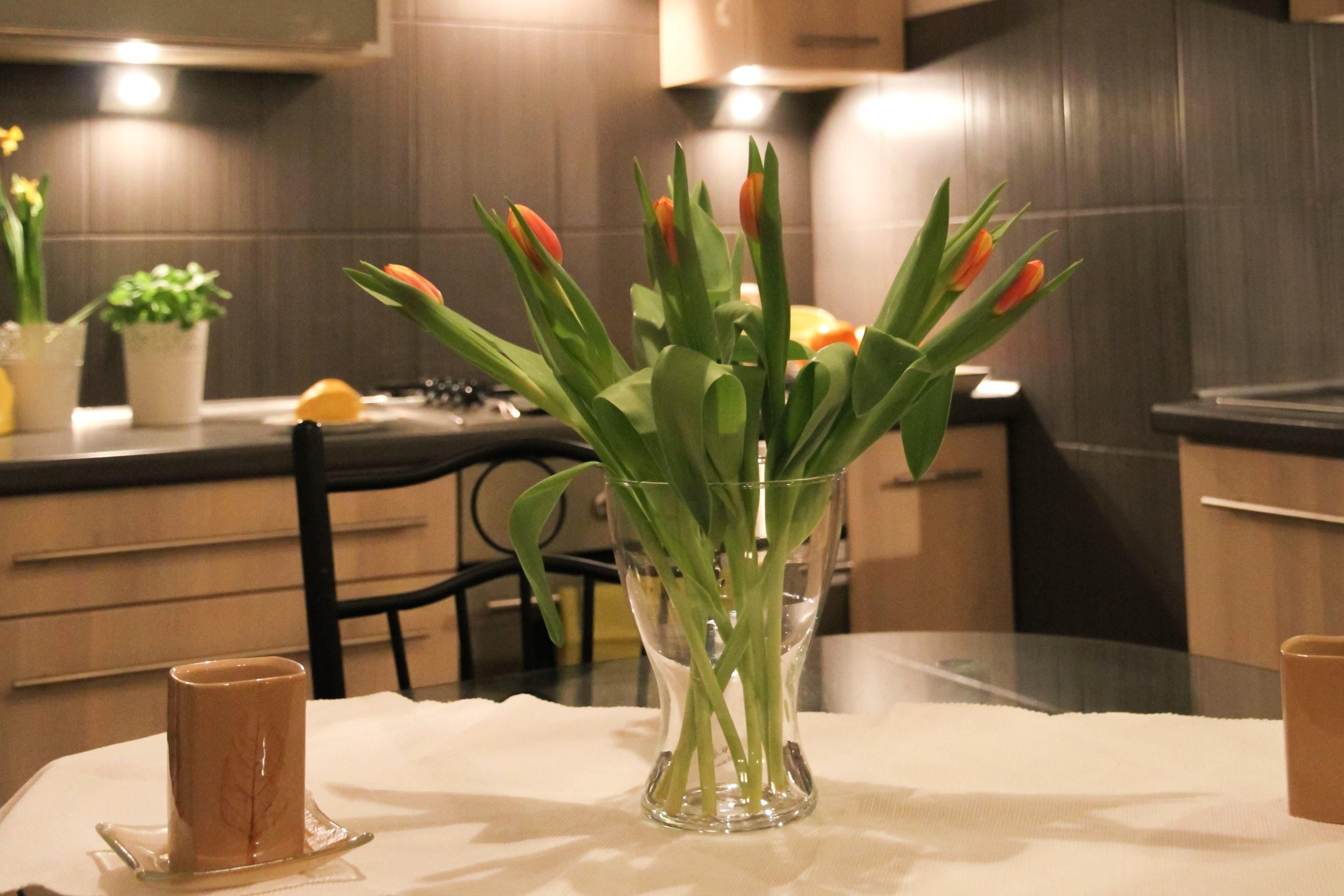 Free Picture Vase Plant Flower Leaf Decoration House