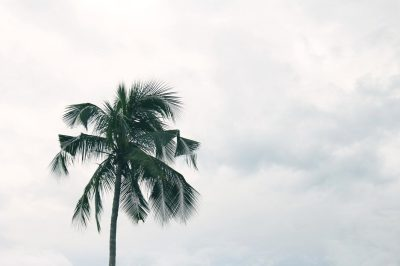 Free picture: palm tree, sky, summer, sun, nature, coconut ...