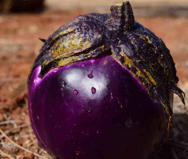 Nature Food Eggplant Ground Gr Outdoor