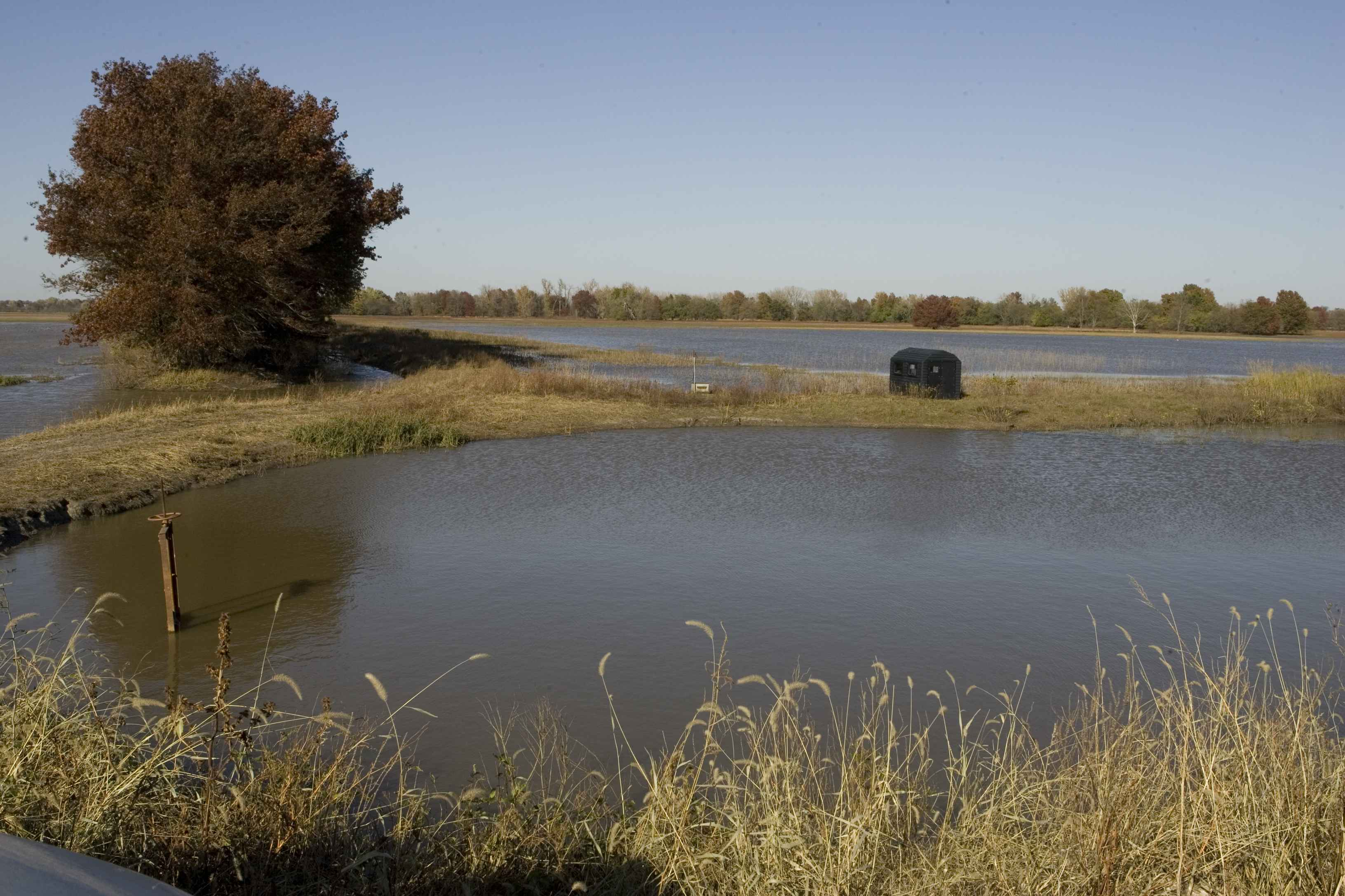 Free Picture Small Black Structure Narrow Ground Between Ponds Wildlife Observation
