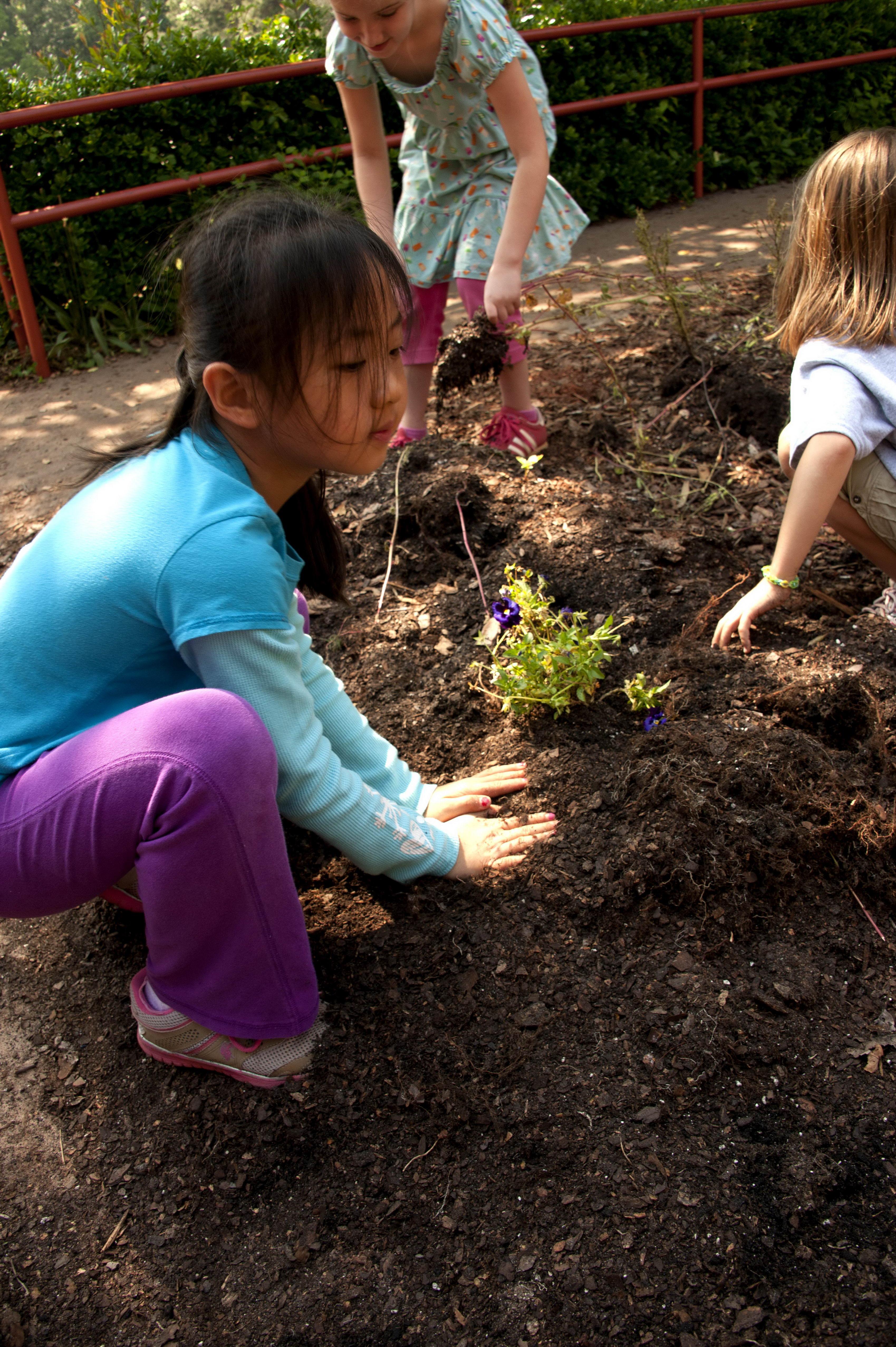 Free Picture Planting Flowers Vegetables School Garden