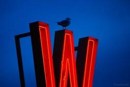 Top Bird