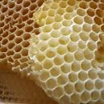 Honey_comb-thumb