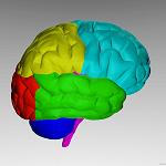 cerebro_150_150