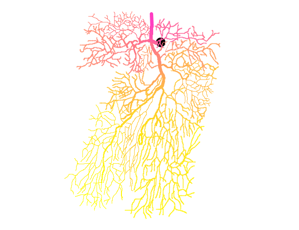 neurona_color_AreaLateral