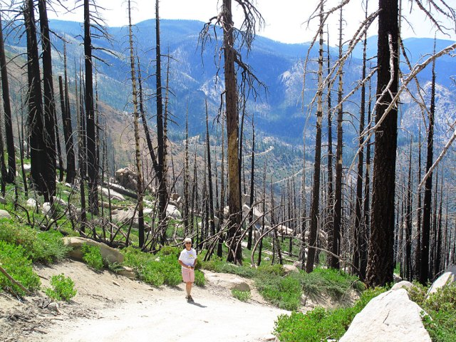 A couple times, when the road dropped off fairly steeply, Carol decided that walking was better than riding. The burned trees gave us great views that we'd otherwise not have (read: high anxiety).