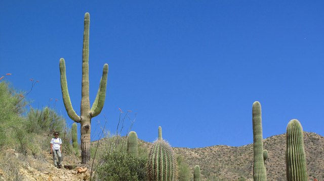 Hiking to Wasson Peak, the highest point in the Tucson Mountain Park.