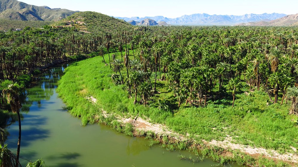 "The Río Mulegé is one of only two ""real"" rivers in Baja California Sur. The river saw lots of recent action from hurricane Odile."
