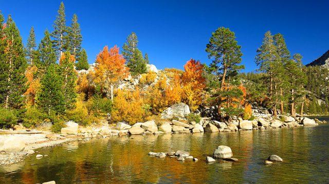 Aspens and pines line Rock Creek Lake.