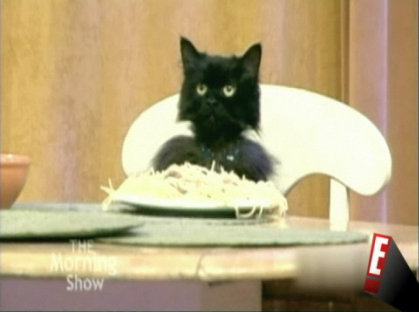 The Soup's Spaghetti Cat