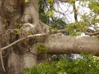 Elephant branch?