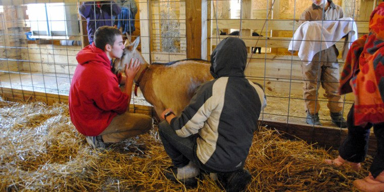 goat birth reluctant_blog_1