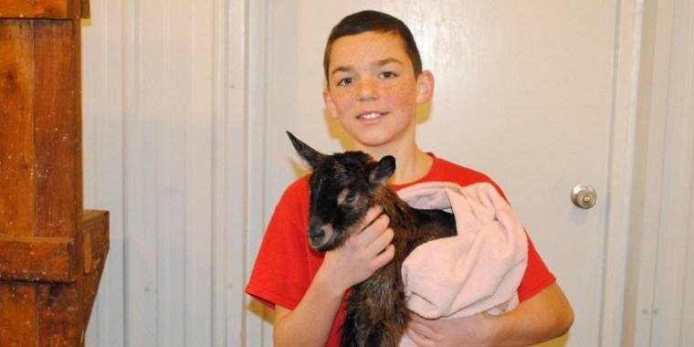 goat birth vanish_3