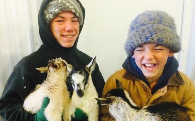 baby goats born