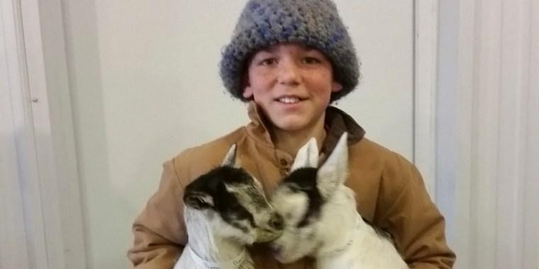 baby goats pembery_blog