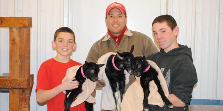 goat birth zipporah_5