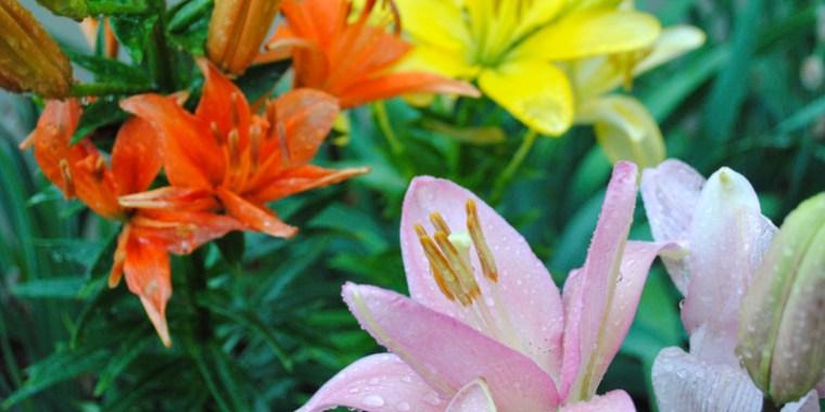 emery's flowers_blog