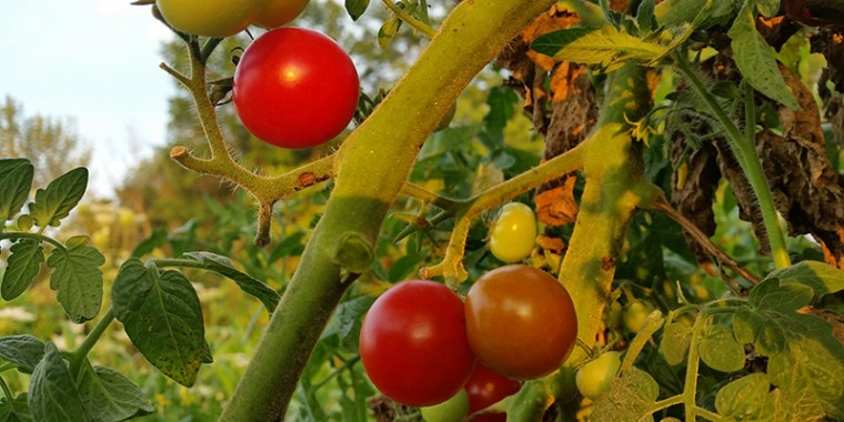 tomatoes the power of small change_blog