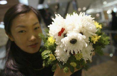 Flower for Pet Lovers2