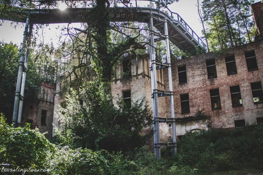 Las na dachu Alpenhaus i ścieżka w koronach drzew