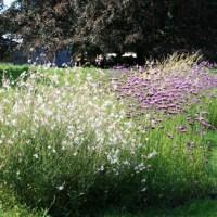 Prairie fleurie d'été... jusqu'en automne!