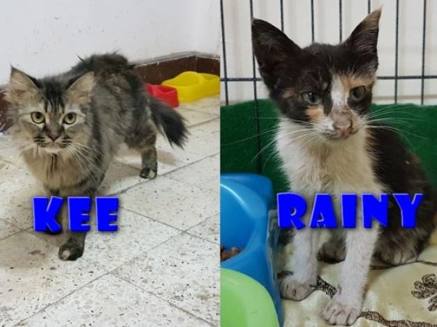 Cat Rescue from Qatar