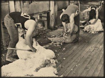 As a Sheep Before its Shearer