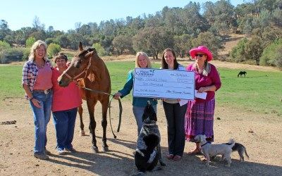 Helping Horses in Need