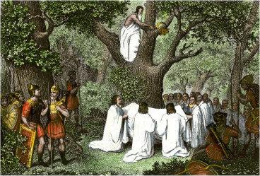 Ceremonia zbierania jemioły przed druidów