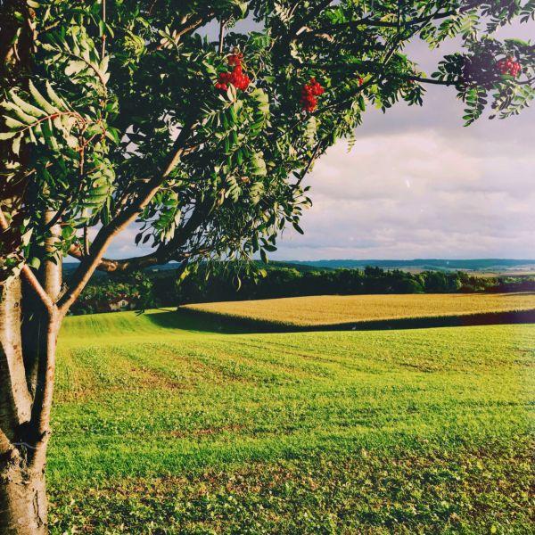 Baum und Feld zur Golden Hour