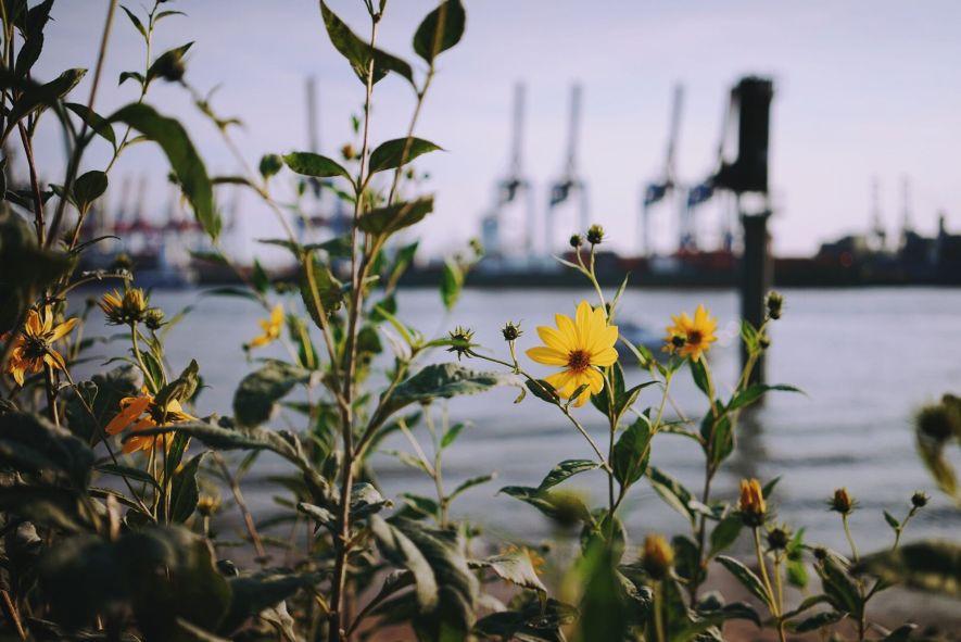 Hamburg port with flowers