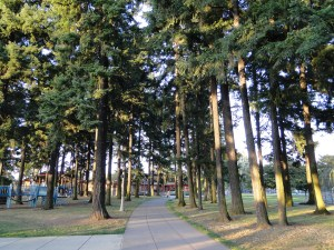 Portland's trees often dominate its buildings