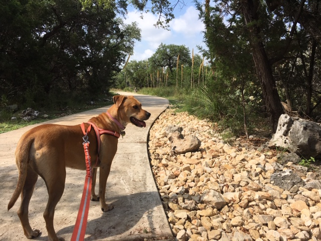This wonderful trail is one of many dog friendly things to do in San Antonio.