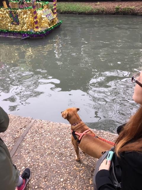 Abbey watches the San Antonio Riverwalk parade.