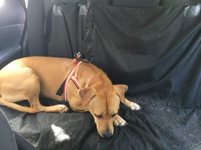 Not the best backseat dog cover