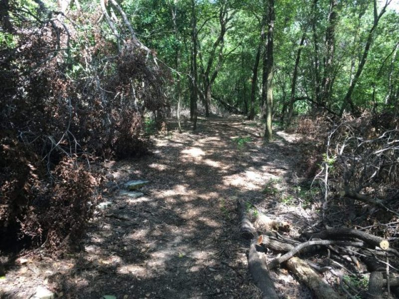 Piles of brush and dead trees in the nature preserve at one of the spookiest places.