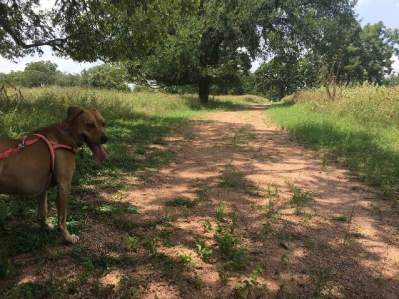 Nature trail and wildflowers at LBJ State Park