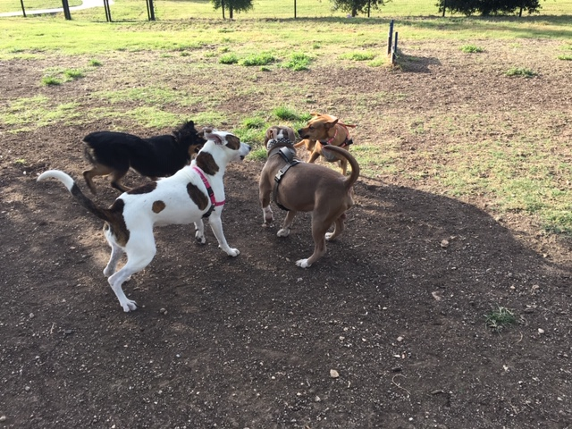 New friends at this dog friendly place in San Antonio.