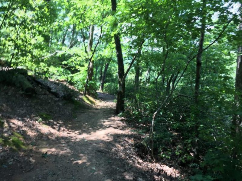 Part of the wooded trail at Morgan Falls Overlook Park.