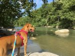 Hike, Canoe, and Swim with Dogs at Guadalupe River State Park
