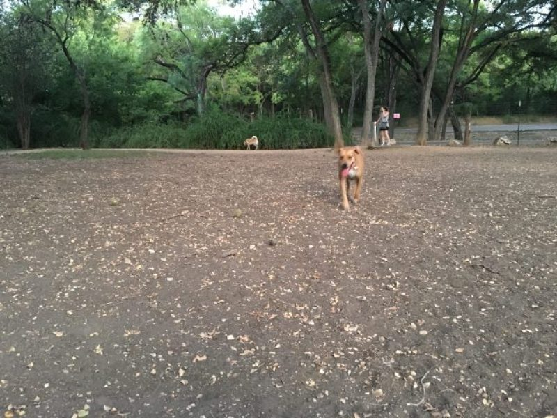 Running through the dirt at the dog park.