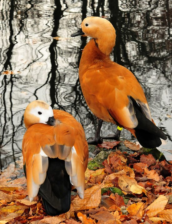 ff-birds