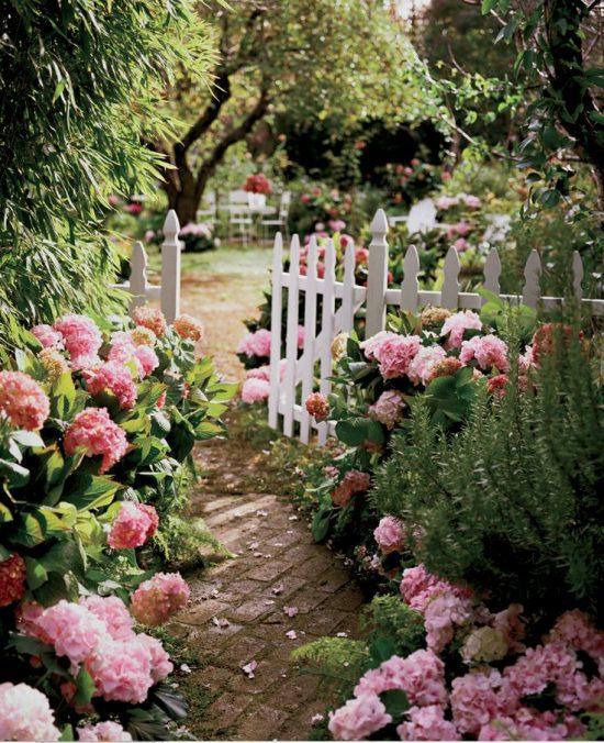 pink-hydrangeas-garden