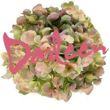 signature-pink