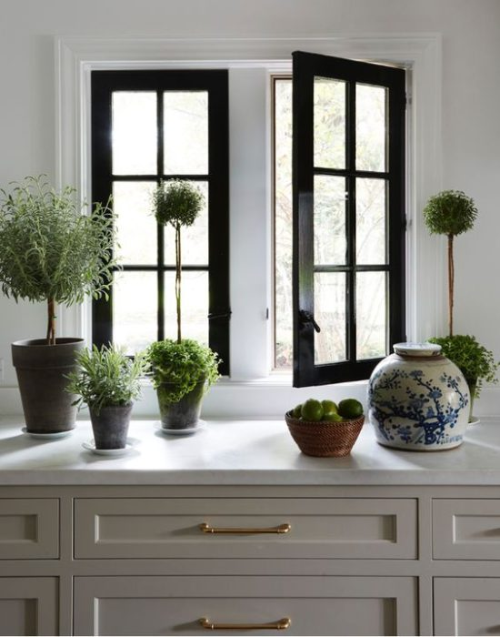 plants-kitchen-counter
