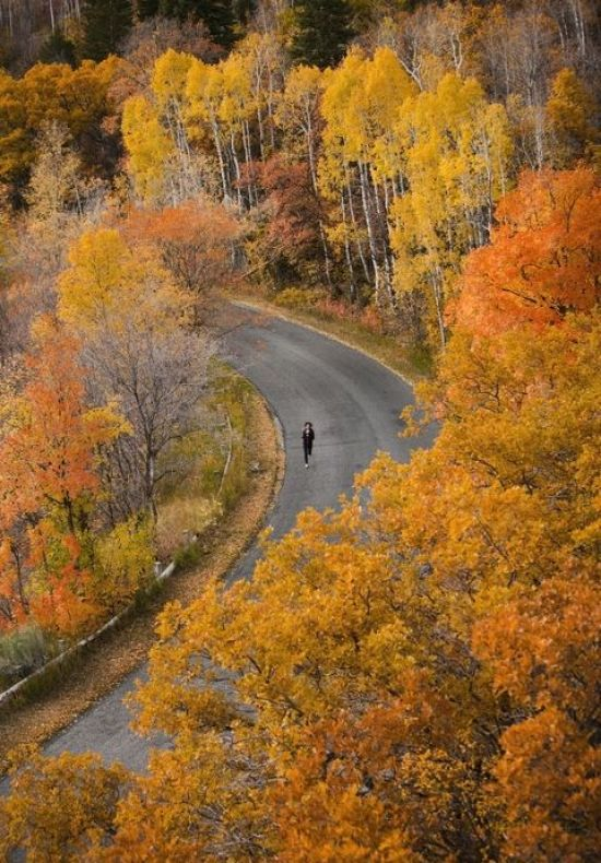running fall roads