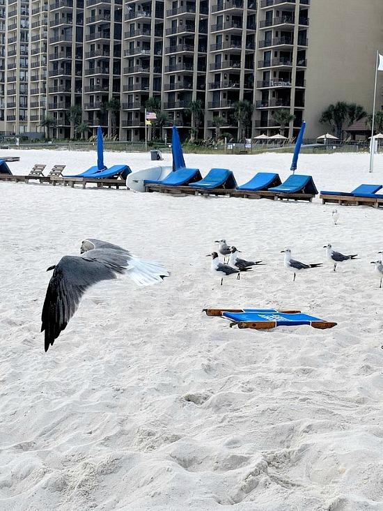 beach-birds-flying