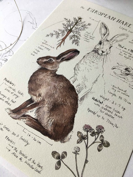 European Hare print