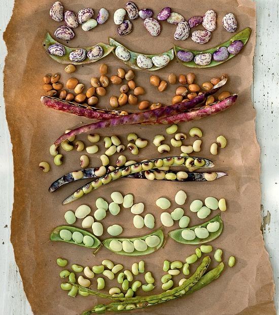 summer-fresh-peas