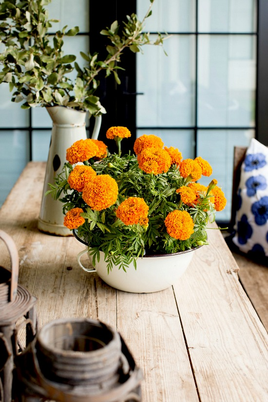marigolds-on-wood-table